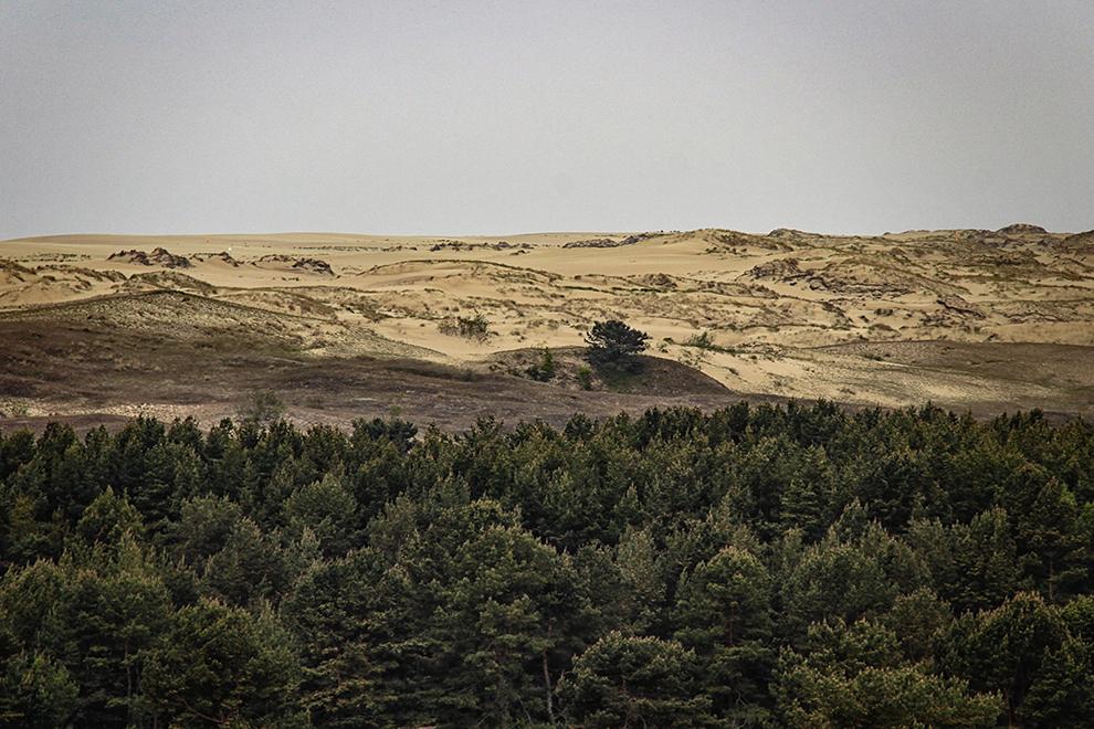 Parnidžio kopa Nida